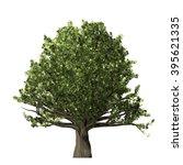 oak tree isolated on white... | Shutterstock . vector #395621335