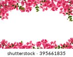 bougainvillea flower frame on... | Shutterstock . vector #395661835