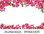 Bougainvillea Flower Frame On...