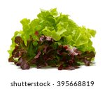 Red And Green Oak Lettuce With...