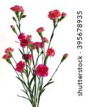 Red Mini Carnation Flowers