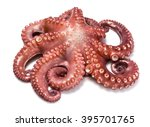 Octopus Over White Background