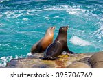 California Sea Lions On The...