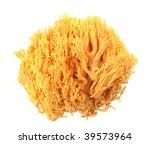 Coral Mushroom Ramaria Flava...