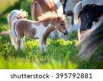 Herd Of Small Cute Horses In...