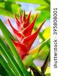 Vibrant Tropical Flower ...
