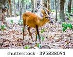 Cambodia 2015   Cute Spotted...