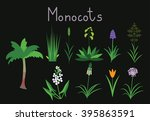 Examples Of Monocots Plants...