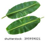 fresh banana leaf isolated with ... | Shutterstock . vector #395959021