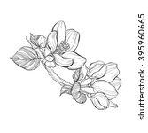 branch apple tree. vector... | Shutterstock .eps vector #395960665