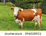 A Brown Cow With White Spots...