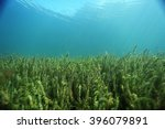 underwater scenery in the river ... | Shutterstock . vector #396079891