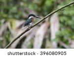 green kingfisher perched on a... | Shutterstock . vector #396080905