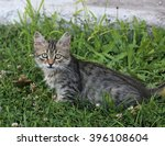a tabby kitten posing on some... | Shutterstock . vector #396108604
