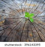 ecology concept. rising sprout...   Shutterstock . vector #396143395