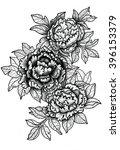 peonies . graphic arts . hand... | Shutterstock . vector #396153379