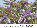 Texture Of Of Lagerstroemia ...