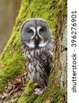 siberian tawny owl | Shutterstock . vector #396276901