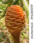 zingiber zerumbet flower | Shutterstock . vector #396284059