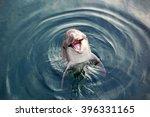 dolphins | Shutterstock . vector #396331165