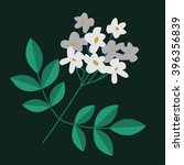 Flowering Branch Isolated With...