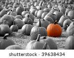 Large Pumpkins Sitting In Field