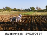 Farming And Cultivations In...