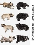 Dogs In Different Positions