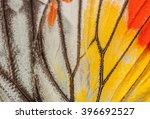 butterfly  closeup painted... | Shutterstock . vector #396692527