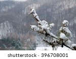 Small photo of Snow adhere on branch