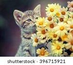 Cute Little Kitten Sniffing...