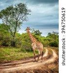 south african wildlife  wild... | Shutterstock . vector #396750619