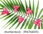 Orchid Flowers And Palm Leaves...