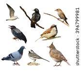 set birds isolated on white... | Shutterstock . vector #396799981