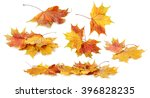 Autumn Leaf Isolated On A Whit...