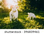 mother and kid goats on a green ... | Shutterstock . vector #396839461