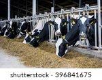 cows in a farm. dairy cows   Shutterstock . vector #396841675