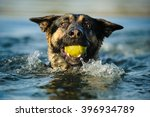 German Shepherd Swimming With...