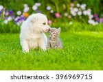 Puppy Sniffing Kitten On Green...