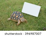 turtle on grass with copy space | Shutterstock . vector #396987007
