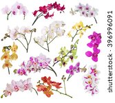 set of different orchid flowers ... | Shutterstock . vector #396996091