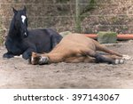 Two Horses Lay Down To Sleep
