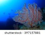 scuba divers exploring coral... | Shutterstock . vector #397157881
