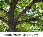 green leaf tree branches in a... | Shutterstock . vector #397212499
