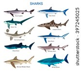 shark fish vector set in flat... | Shutterstock .eps vector #397245025