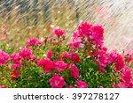 Watering garden flowers - stock photo