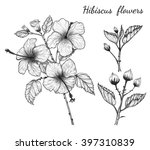 hibiscus flowers vector by hand ...