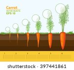 Vector Illustration. Phases Of...