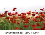 Field Of Red Poppies Against...