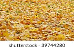 thick yellow rug of autumn... | Shutterstock . vector #39744280